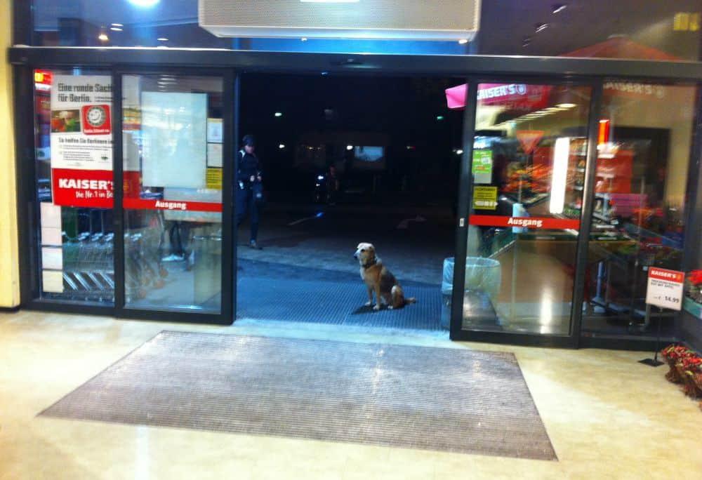 Løs hund venter på ejerLøs hund venter (stadig) på ejer